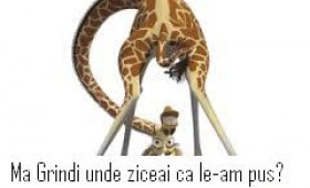 Curiozităţi din lumea.. girafelor