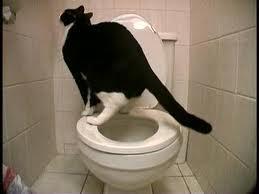 pisicul la wc