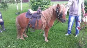 calul lui Antonescu