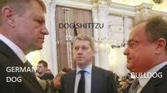 dogshitzu